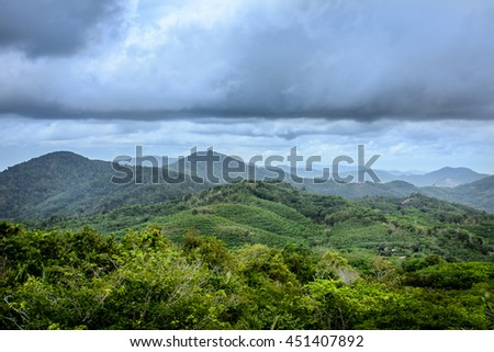 Tropical Rubber tree forest on a rainy day - stock photo