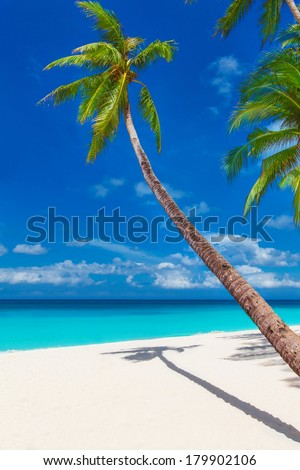 tropical sand beach with palm trees, summer vacation vertical photo - stock photo