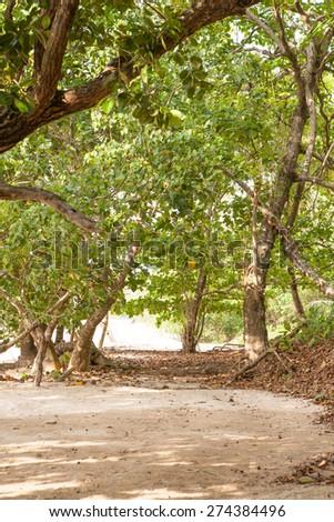 Tropical sandy beach with beautiful vegetation - stock photo