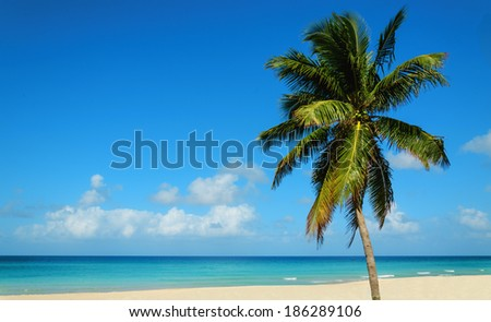 Tropical sandy beach with exotic palm tree, against blue sky and azure water, Caribbean Island  - stock photo