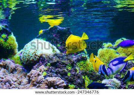tropical sea fish - stock photo