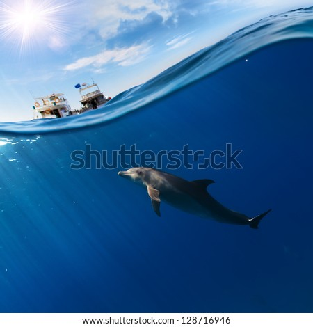 tropical seascape with water waved surface and dolphin swimming underwater - stock photo