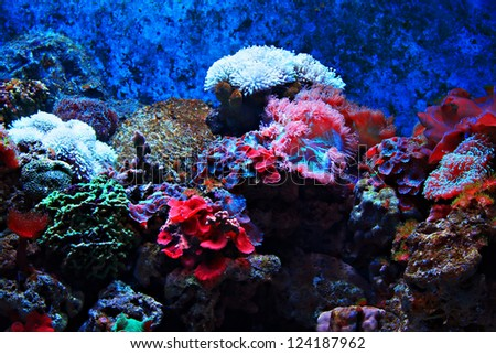 Tropical seaweed and corals, Thailand - stock photo