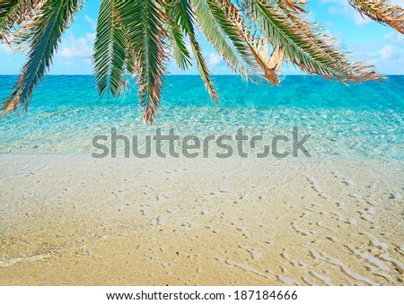 tropical shore under a palm tree - stock photo