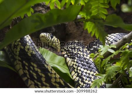 Tropical snake in his habitat - stock photo