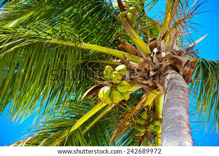 Tropical summer beach with palm leaf tree branch  sea and sky background with coconut - stock photo