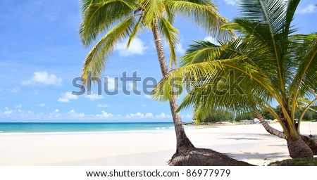 Tropical summer nature scene with palm trees on white sand beach - stock photo