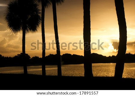 Tropical sunset over the lake in Miami, Florida