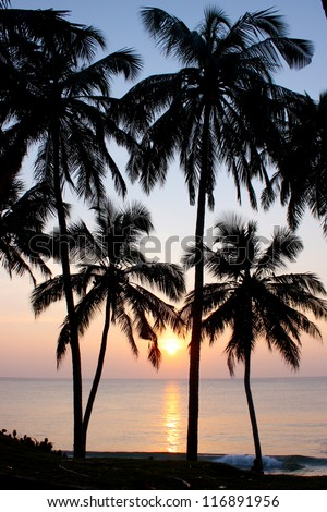 Tropical sunset, palm trees , taken in Varkala, India - stock photo