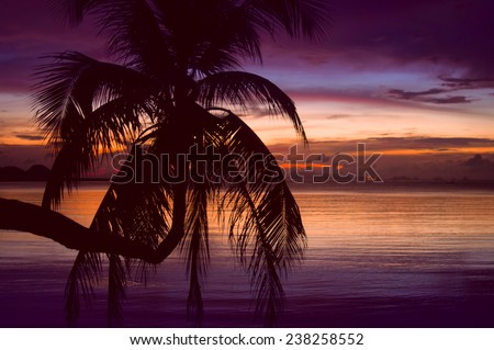 tropical sunset with silhouette of palm - stock photo