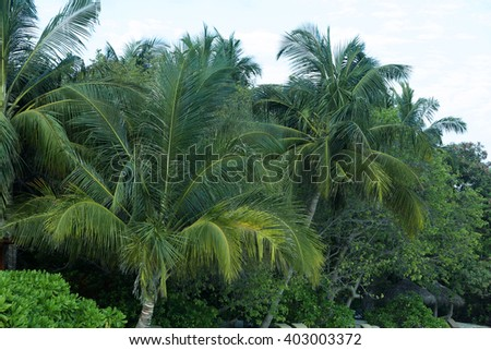 Tropical trees and cloudy  sky..