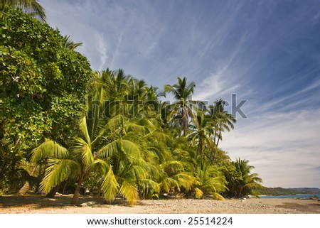 Tropical trees line a beach in Costa Rica - stock photo