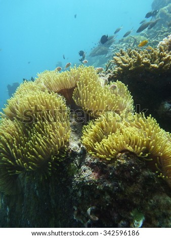 Tropical underwater life in the sea. - stock photo