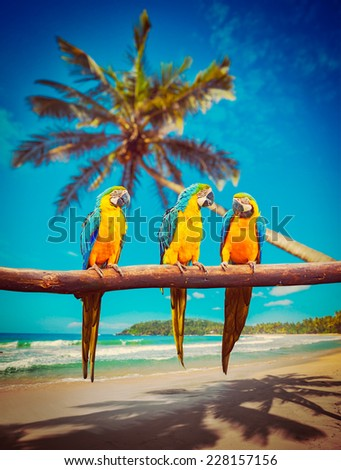 Tropical vacation concept - three parrots (Blue-and-Yellow Macaw (Ara ararauna) also known as the Blue-and-Gold Macaw ) on tropical beautiful idyllic beach and sea background - stock photo