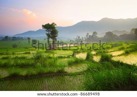 Tropical valley with rice terraces and trees. Bali. Indonesia - stock photo