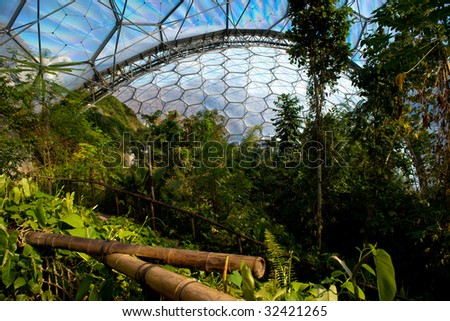Tropical vegetation in the Eden Project, Corwnall - stock photo