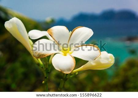 Tropical Verdure Idyllic Blossom  - stock photo