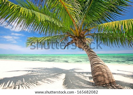 tropical  white sand beach with a palm and turquoise water - stock photo
