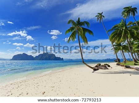 Tropical white sand beach with palm trees. - stock photo