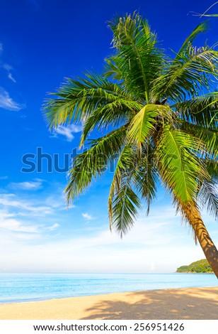Tropical white sand with palm tree on the beach Phuket. Thailand - stock photo