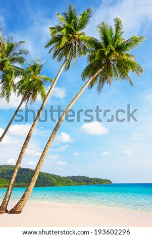 Tropical white sand with palm trees at Koh Kood, Thailand - stock photo