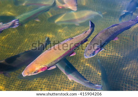 Fishing production stock images royalty free images for Trout farm fishing near me