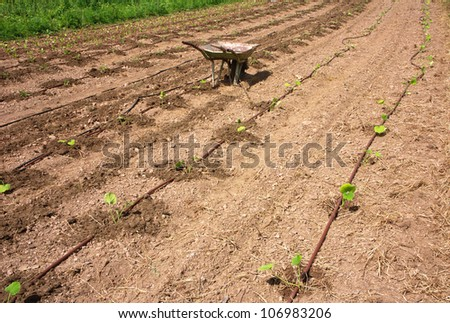 Truck in eco agricultural garden with drip irrigation - stock photo