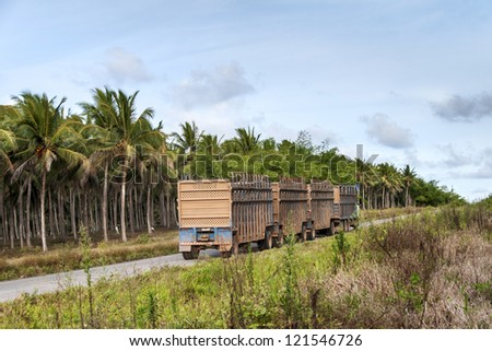 Trucks for the transport of sugar cane for the production of ethanol in Brazil - stock photo