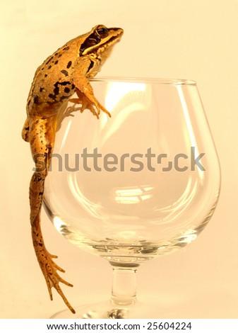 True frog (Rana) climbing tall wineglass - stock photo