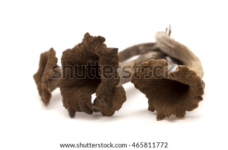 trumpet of the dead edible mushroom isolated on white background