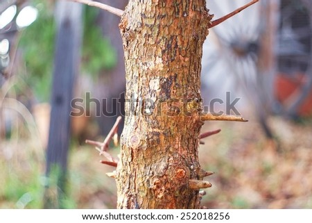 Trunk,bark,Trees without leaves dry fallen leaves , stems, leaves , dried waiting born again - stock photo