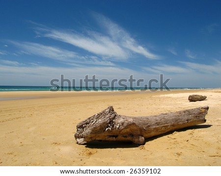 Trunk on a sunny beach - stock photo