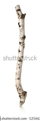 Trunk or branch of a birch isolated on a white background - stock photo