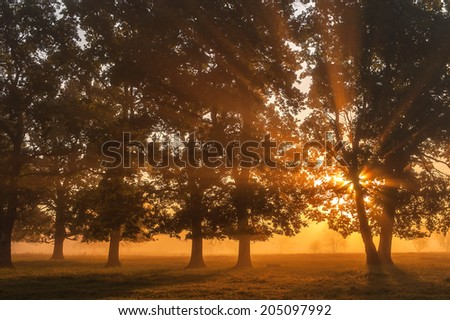 trunks of oaks in a clearing in the morning sun - stock photo