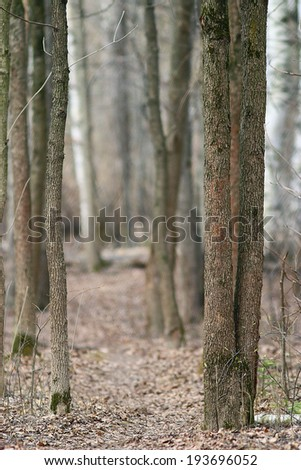 trunks of trees without leaves, background