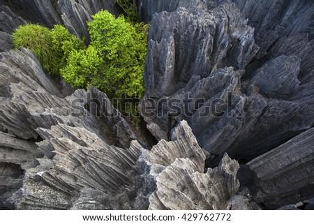 Tsingy de Bemaraha, Madagascar, Africa - stock photo