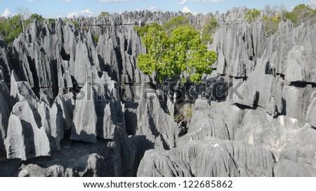 Tsingy de Bemaraha. Mahajanga. Madagascar - stock photo