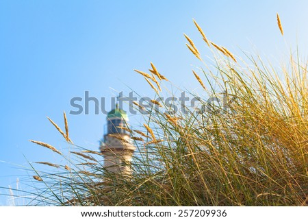 Tuft of beach grass in the sunshine and a lighthouse tower at the side background/Beach Grass and Lighthouse in the Sunlight - stock photo