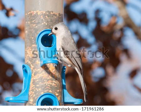 Tufted titmouse, Baeolophus bicolor , looking for seeds at bird feeder in winter - stock photo