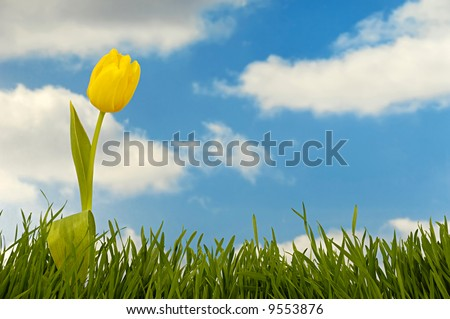 Tulip and green grass with blue sky and clouds in the background.