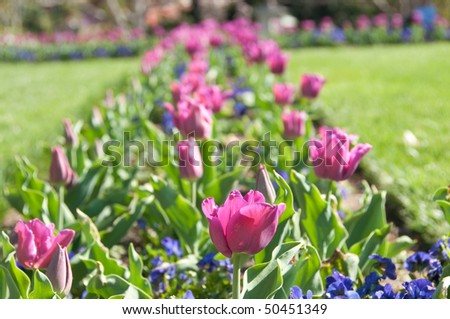 Tulip Bed in the Smithsonian Castle Garden - stock photo