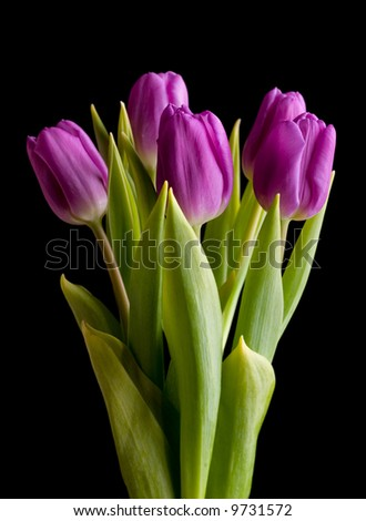 Tulip bouquet over black background