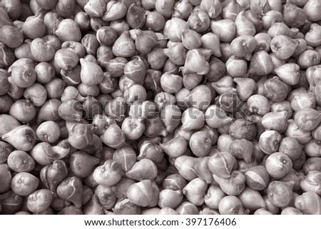 Tulip Bulbs for Sale in Holland in Black and White Sepia Tone - stock photo