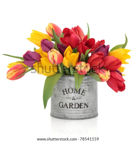 Tulip flower arrangement in rainbow colours in an old aluminum tin can with home and garden in words isolated over white background. - stock photo