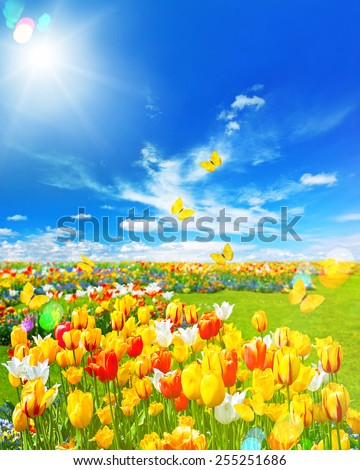 Tulip flowers in green grass. Spring landscape with butterflies and sunny blue sky. Retro style toned picture with light leaks and lens flares - stock photo
