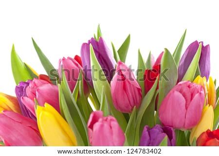 Tulip flowers on white background - stock photo