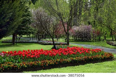 Tulip garden in the springtime - stock photo