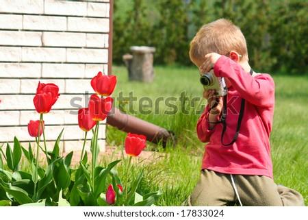 Tulip photographer - stock photo