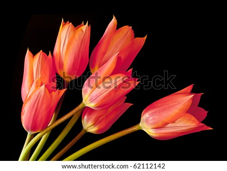 Tulip Spray