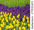 Tulips and bluebells in the spring garden - stock photo